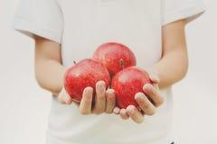 Ребенок держит красные яблока в руках, изолированных на белой предпосылке Стоковые Изображения