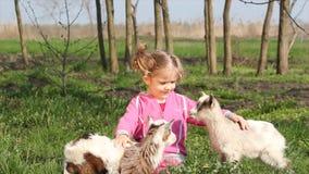 Ребенок и 2 козы видеоматериал