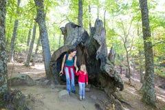 Ребенок и мать внутри большого старого хобота каштана Стоковое Изображение