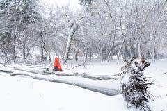 Ребенок и сломал вниз с дерева снега Горизонтальный взгляд sitt ребенка Стоковое фото RF