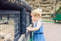 Ребенок, маленькая девушка малыша смотря на животных и птицы через деревянное обнести зоопарк В всеединстве с природой Recr семьи Стоковое Изображение