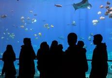 Ребенок наблюдает водолаза акваланга в танке с различными тварями моря на аквариуме США Georgia Стоковые Фотографии RF