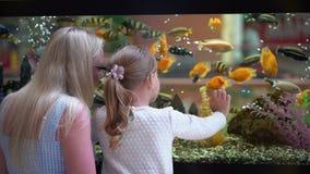 Ребенок, наблюдать маленькой девочки, смотря рыб в аквариуме в моле Зоомагазин Мать и ее маленькая дочь смотрят на море акции видеоматериалы