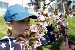 Ребенок обнюхивает цветки яблони Стоковое фото RF