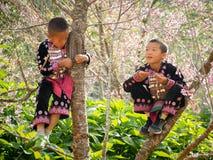 Ребенок племен холма на дереве Стоковые Фото