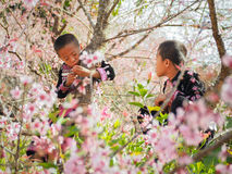 Ребенок племен холма на дереве Стоковое фото RF