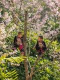 Ребенок племен холма на дереве Стоковые Фотографии RF