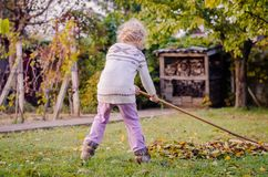 Ребенок сгребая упаденные листья стоковые фото
