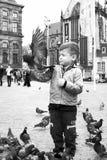 ребенок с голубем в квадрате запруды в Амстердаме в Нидерландах Стоковая Фотография