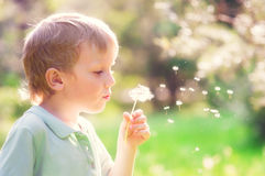 Ребенок с одуванчиком стоковое изображение