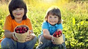 Ребенок с садом клубник солнечным с летним днем стоковые фотографии rf