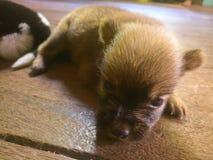 Ребенок щенка дома стоковые изображения