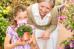 ребенок cyclamen запах магазина бабушки сада Стоковые Фотографии RF