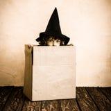 ребенок halloween Стоковая Фотография RF