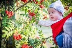 Ребенок outdoors около дерева рябины стоковое фото rf