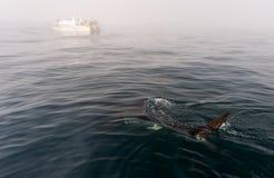 Ребро акулы надводное стоковое фото