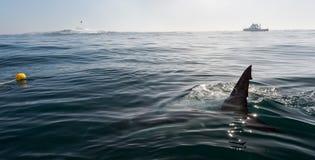 Ребро акулы надводное стоковое фото rf