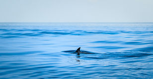 Ребро акулы стоковое фото
