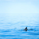 Ребро акулы стоковые фото