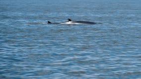 Ребро кита ` s Bryde Стоковое Изображение
