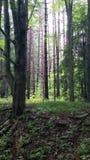 древесина лета Стоковое Изображение