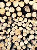 древесина журнала Стоковые Фото