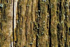 древесина доски старая Стоковые Изображения