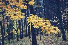 древесина отражения озера осени Стоковое Фото