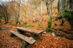 древесина отражения озера осени Стоковые Фото