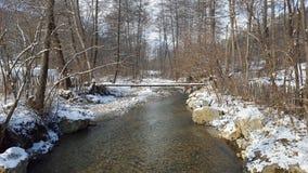 древесина песни природы влюбленности grouse одичалая Стоковая Фотография RF