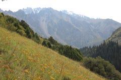 древесина песни природы влюбленности grouse одичалая Стоковое фото RF