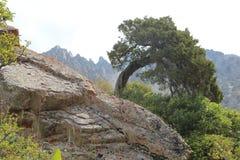 древесина песни природы влюбленности grouse одичалая Стоковые Фото