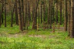 древесина сосенки предпосылок полезная Стоковая Фотография RF