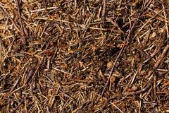 древесина сосенки холма муравея Стоковые Фотографии RF