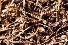 древесина сосенки холма муравея Стоковые Фото