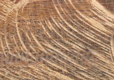 древесина текстуры предпосылки естественная Стоковое Фото