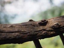 древесина Стоковая Фотография