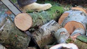 древесина sawing вырезывания работника с цепной пилой газа акции видеоматериалы