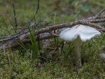 древесины гриба Стоковое Изображение RF