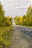 древесины дороги рощи березы Стоковое Фото