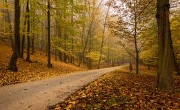 древесины дороги рощи березы Стоковое Изображение