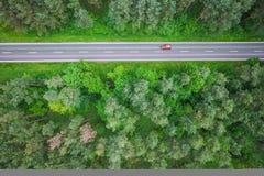древесины дороги рощи березы Стоковые Изображения