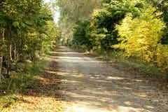 древесины дороги рощи березы Стоковые Изображения RF