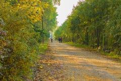 древесины дороги рощи березы Стоковое фото RF
