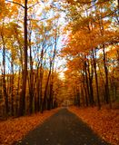 древесины прогулки Стоковая Фотография RF