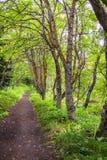 древесины прогулки Стоковые Фотографии RF