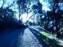 древесины прогулки стоковые изображения rf