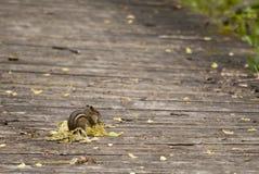 древесины прогулки Стоковое фото RF