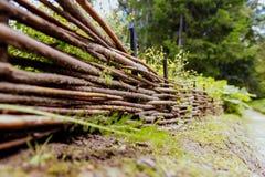 древесины прогулки Стоковое Фото