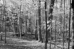 древесины прогулки Стоковое Изображение RF